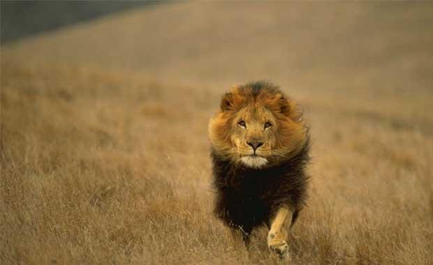 <strong>Aslan</strong>