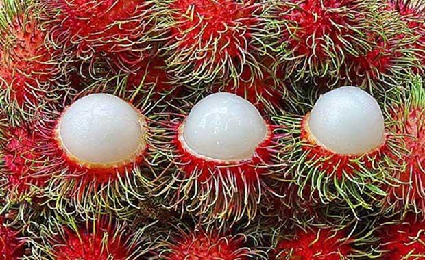 <div> Rambutan</div> <div> &nbsp;</div>