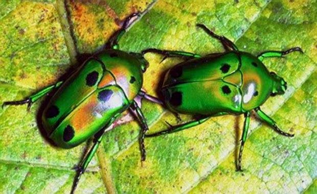 Böcek Yetiştiriciliği Yapmak