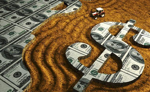 Mısır, Buğday ve Pamuk Ticareti Yapmak