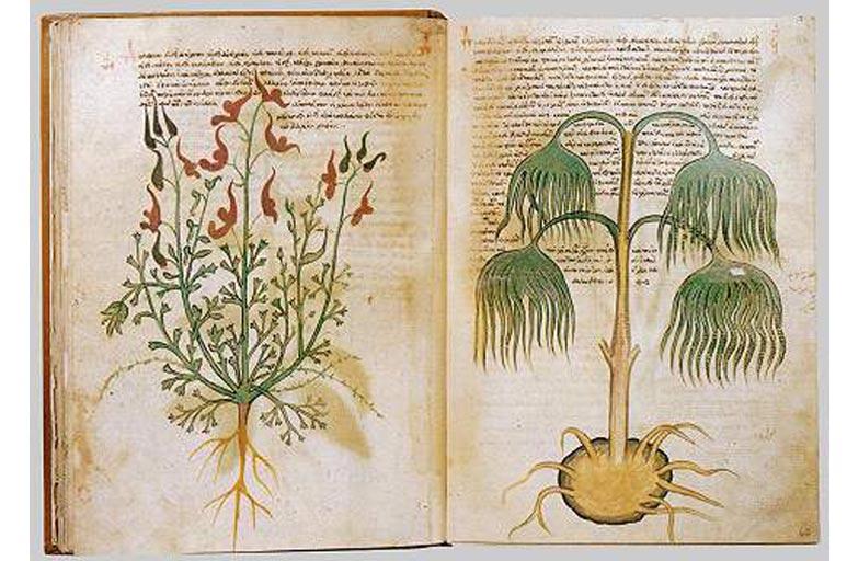 Voynich Elyazması