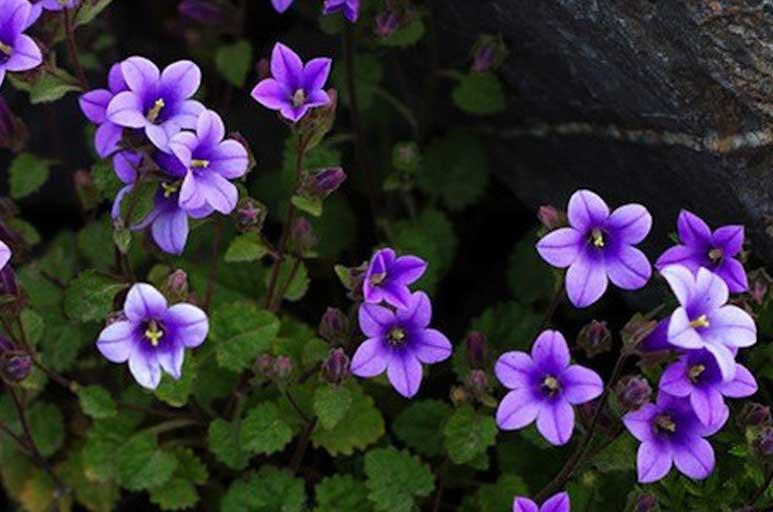 Yalnızca Türkiyede Yetişen 16 Endemik Bitki Türü