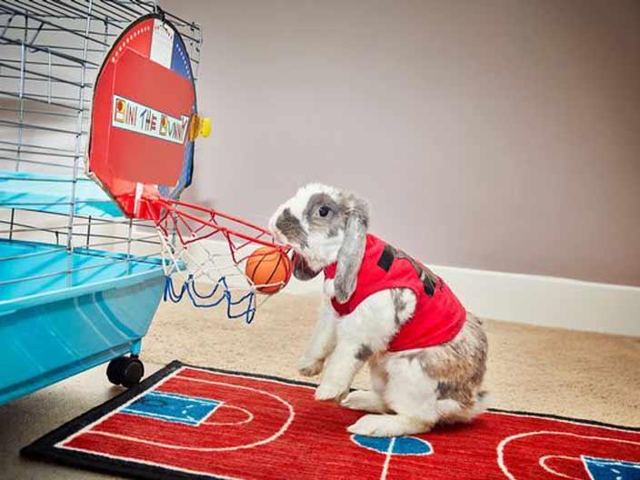 <strong>3. En çok smaç basket atan tavşan</strong>