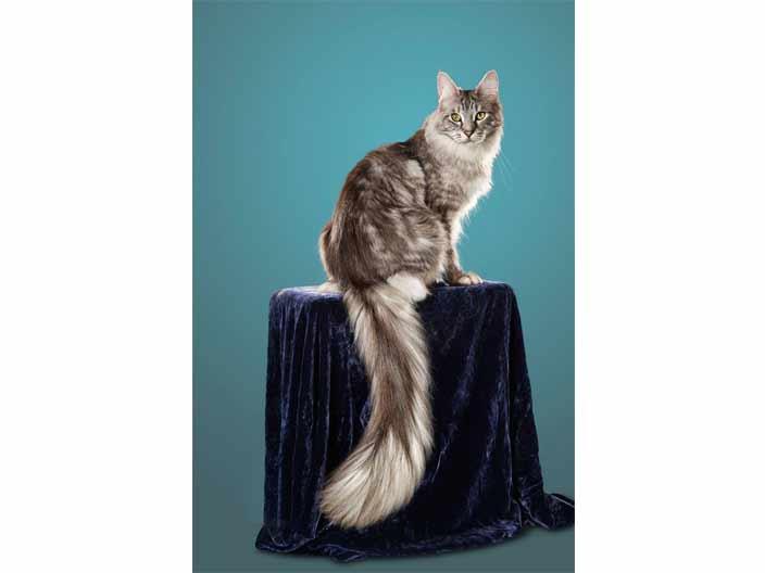 <strong>1. En uzun kedi kuyruğu</strong>