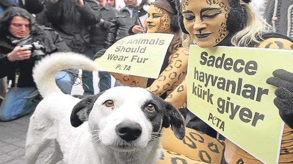 Hayvanları ve doğayı hiç olmazsa kendimiz için koruyalım!