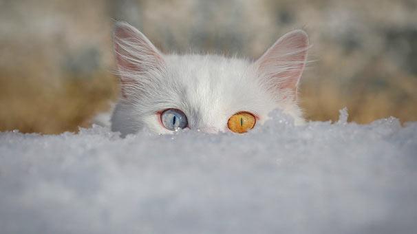 <strong>Van kedilerine takip - Özkan bilgin</strong>