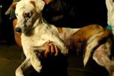 Ölmek üzere bulunan köpeğin inanılmaz değişimi