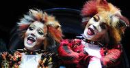 Soruyu bil, ünlü CATS Müzikali'ne bilet kazan!