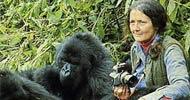 Dian Fossey'nin esrarengiz ölümü