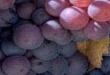 En güzel şarapların üretildiği bölgeler