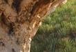 Dünyanın en ilginç ağaçları
