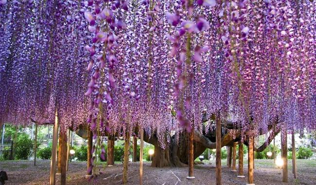 Morsalk m cenneti ashikaga haberler sayfa 4 for Beaux arbres de jardin