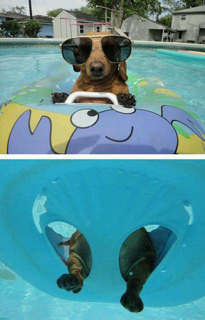 Yerinde olmak istediğimiz havuz keyfi yapan hayvanlar