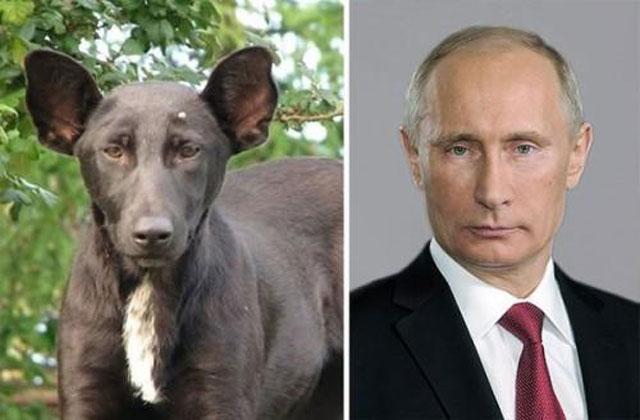 Ünlülere birebir benzeyen köpekler