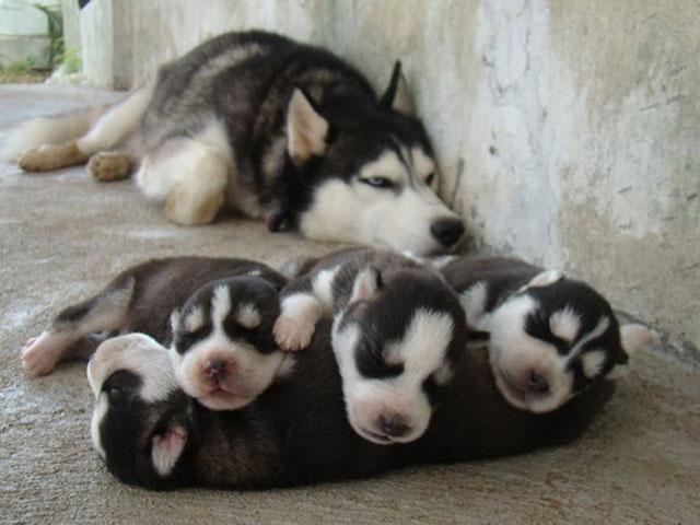 Gururlu anne hayvanlar