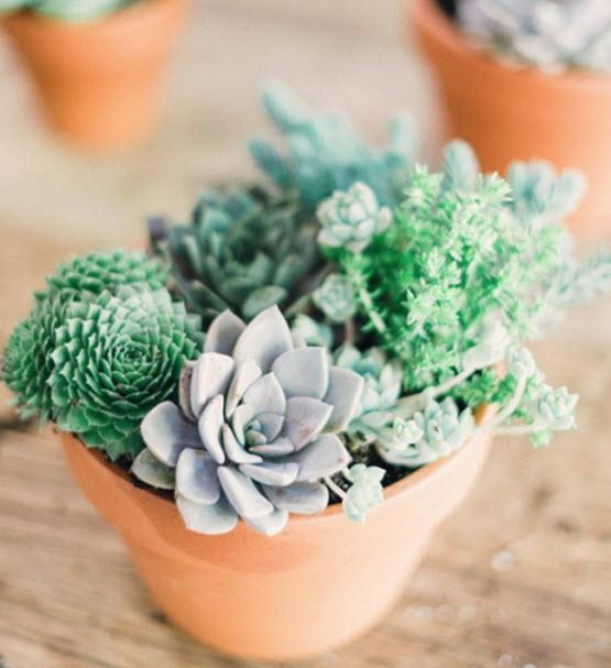 Evde bakımı en kolay bitkiler