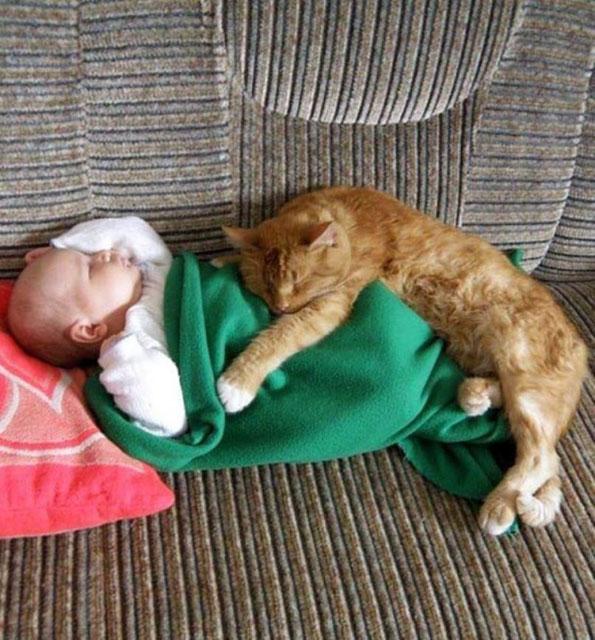 Kediler ve çocuklar