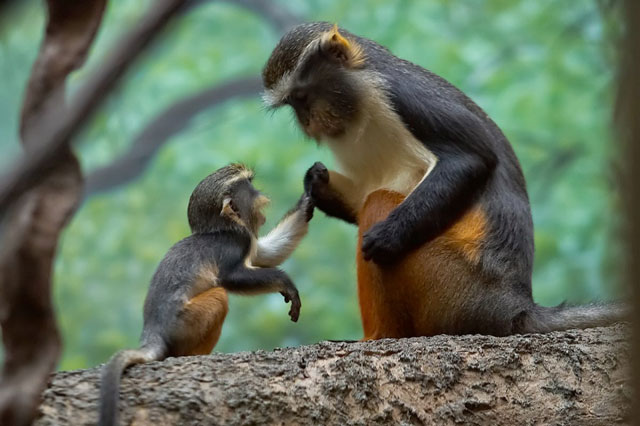 Hayvanların anneleriyle en sıcak fotoğrafları