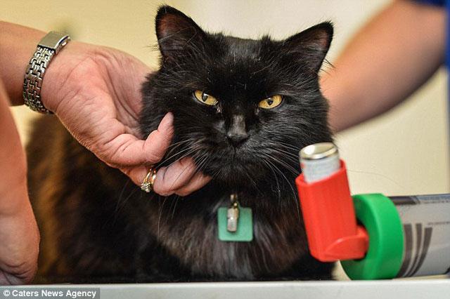 Astımlı kediye özel solunum cihazı