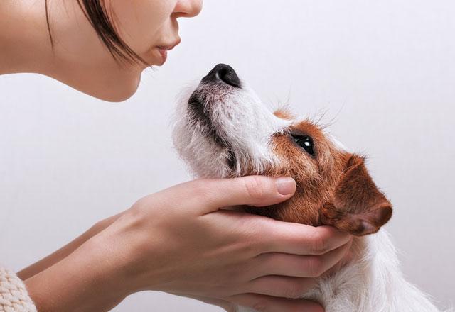 Köpekler hakkında bilinmesi gerekenler