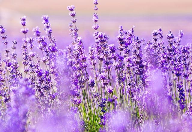 İyi uyumayı sağlayan saksı çiçekleri