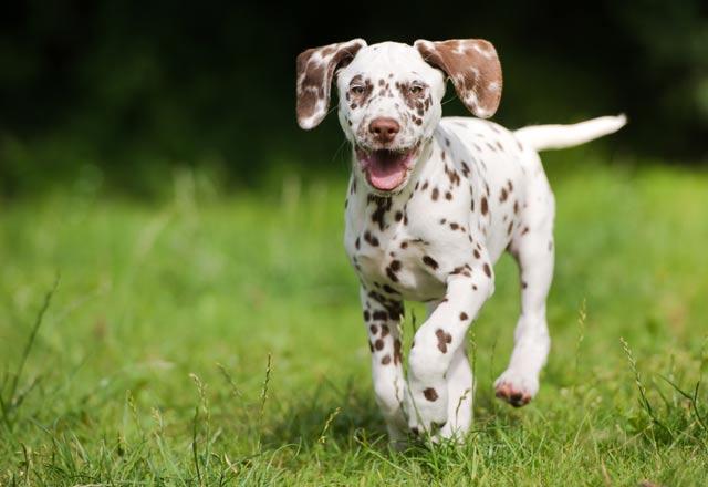 Köpeğinizin dışkısı sağlığı hakkında ne anlatıyor?