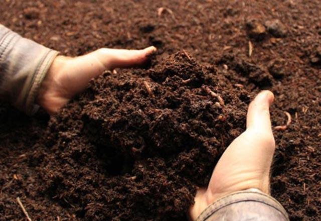 Solucan gübresinin bitki bakımındaki önemi
