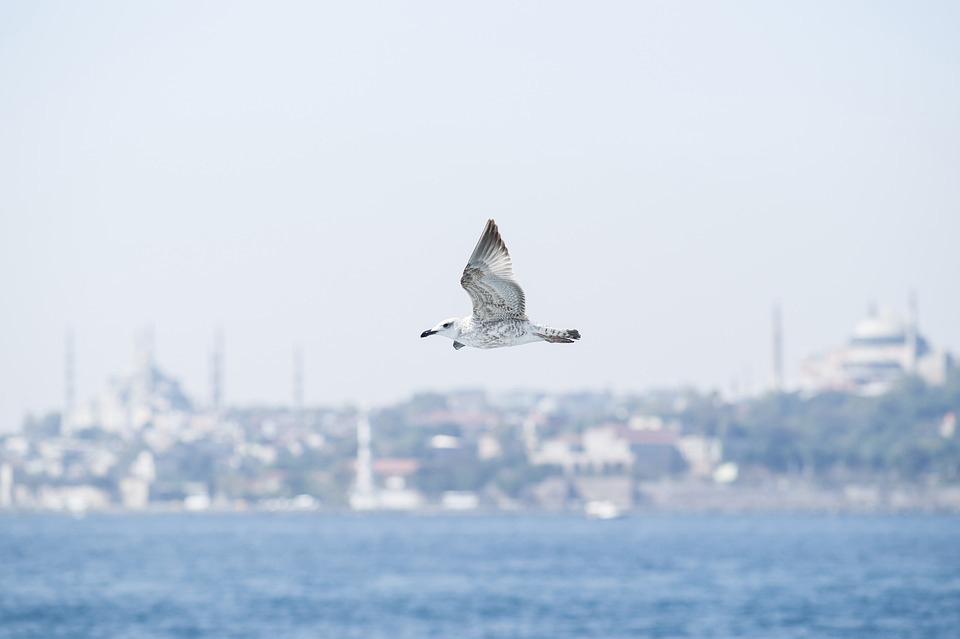 İstanbul yabancılar ilk tercihi oldu