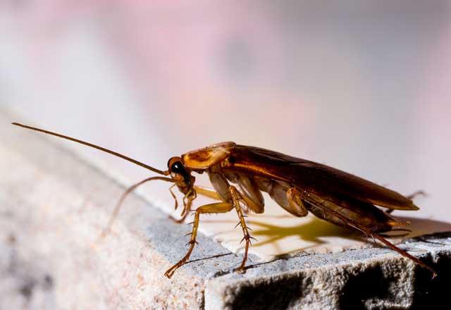 Hamam böceklerini uzak tutacak 5 yöntem