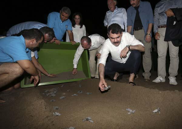 Bakan Kurum, caretta carettaları denizle buluşturdu