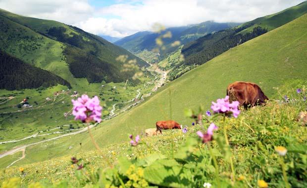 Doğu Karadeniz'de turizm bölgeleri çeşitleniyor