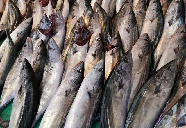 Palamut balığının bilinmeyen faydaları