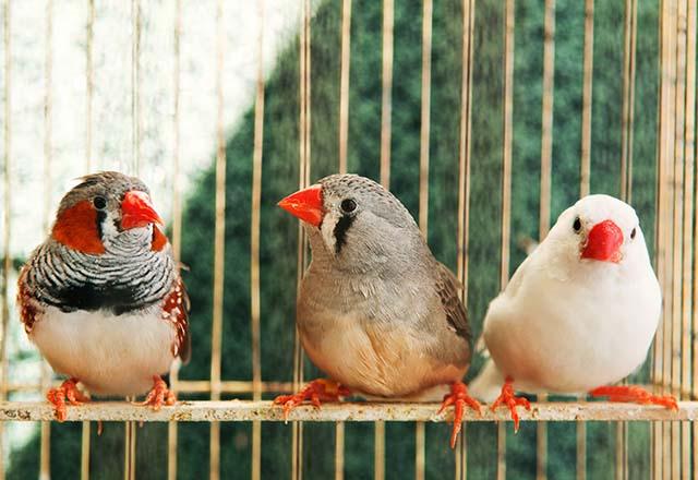 Evcil kuşları nasıl mutlu edersiniz?