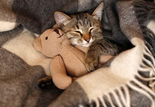 Kedileri soğuktan nasıl koruyabiliriz?