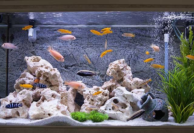 Evinizdeki akvaryumu temizlemenin püf noktaları