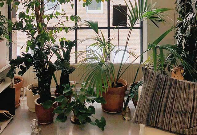 Bahar mevsiminde bitki bakımı nasıl olmalı?