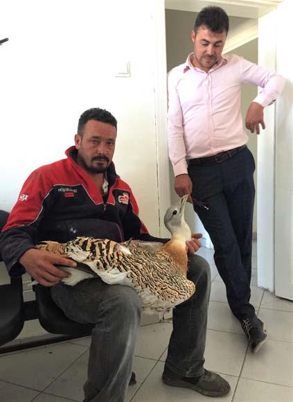 Nesli tükenmişti! Uçabilen en büyük kuş Eskişehir'de bulundu...