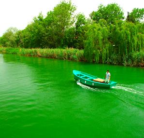İstanbul için tatil önerisi: Ağva ( Yeşilin bütün tonları )