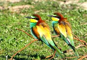 Balıkesir Manyas Kuş Cenneti Millî Parkı Tatil için sizi bekliyor