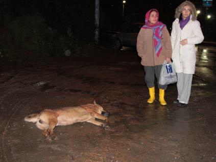 Sokak köpeği silahla öldürüldü