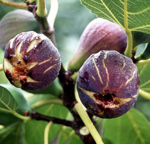 Afrodizyak etkisi yaratan besinler