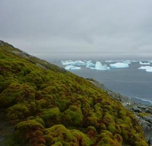 Küresel ısınma Antarktika'da yosun ormanları oluşturuyor