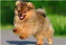 Köpeğini gezdirenlere önemli öneri