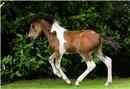 Üzerinde at deseniyle doğdu
