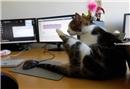 Bu ofise kedi getirmek serbest