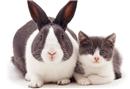 Farklı türlerden hayvan kardeşler