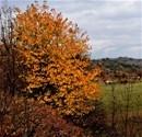 Posof'ta sonbaharın güzelliği