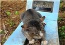 Minik kedi yürekleri parçaladı