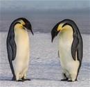Antarktika - Uçta Yaşam