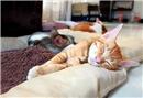 Eviniz kedinize uygun mu?